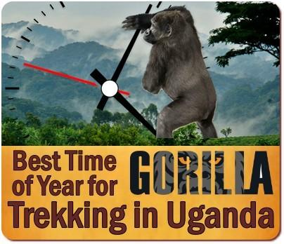 Best time of the year for Gorilla Trekking