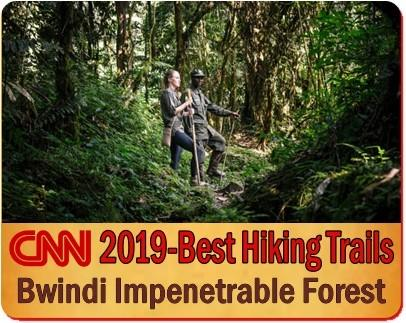 7-Day Luxury Twice-Gorilla Trekking -Hiking Safari in Bwindi Forest
