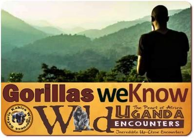 What is the Gorilla Trekking Experience like in Uganda?
