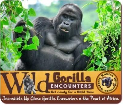 3 Day Fly-In Gorilla Habituation Experience Safari