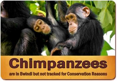 10 - Top Things to Do and See - Bwindi Impenetrable Forest