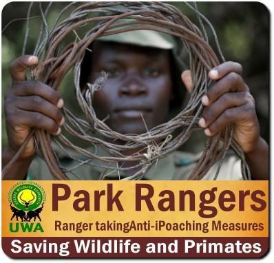 Uganda Wildlife Authority Rangers means safe & secure Park Visits