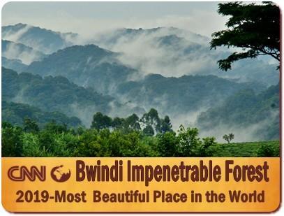 3 Day Fly-In Gorilla Habituation Experience Safari in Bwindi Forest