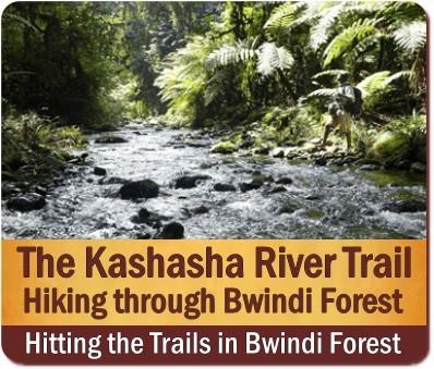 The Best Bwindi Impenetrable Forest Hiking Trails in Uganda