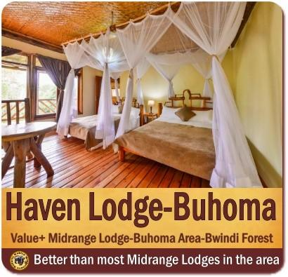 Top Lodging Choices in Bwindi Impenetrable Forest