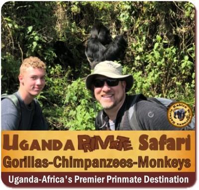 10-Day Exclusive Luxury Primate Habituation Experience Safari