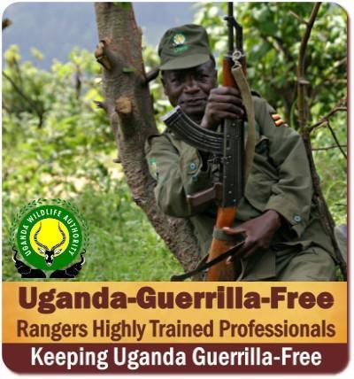 Gorilla Trekking-not Guerrilla Trekking Safaris in Guerrilla-Free Uganda