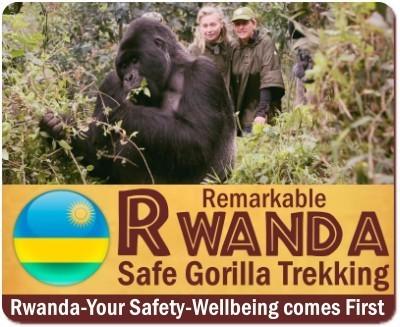 Is it safe to Track Gorillas in Uganda - Rwanda - or the Congo ?