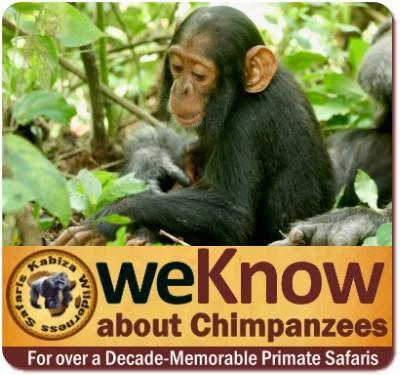 Where is the Best Chimpanzee Trekking in Uganda?