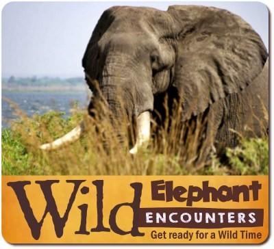 Experience Incredible Wild Encounters in Uganda