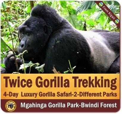 Best Luxury Gorilla Trekking Safaris in Uganda