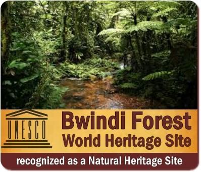 Why Visit Bwindi Impenetrable Forest  in Uganda? 12-Reasons why you should