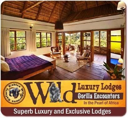 9-Reasons Why a Luxury Safari in Uganda is the right Choice for You