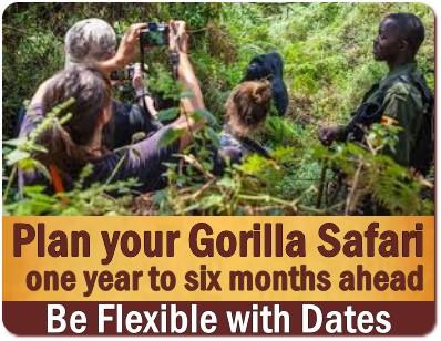Avoid making the The Number 1 Gorilla Permit Mistake