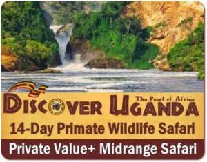 The Best Gorilla Trekking Safaris in Uganda