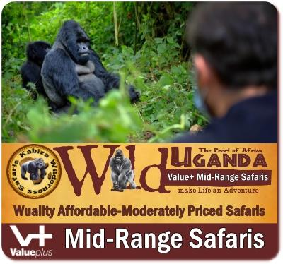 Why a moderately priced Gorilla Safari in Uganda is right for you