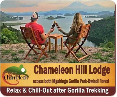 Best Luxury Gorilla Trekking Lodges in Bwindi Impenetrable Forest
