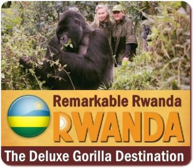 How much does a Gorilla Safari Cost in Uganda-Rwanda-DR Congo?