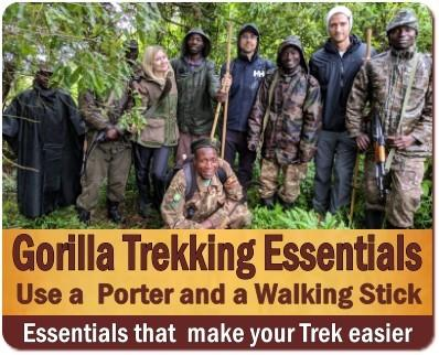 Call it Gorilla Tracking or Trekking-It is an incredible Gorilla Encounter