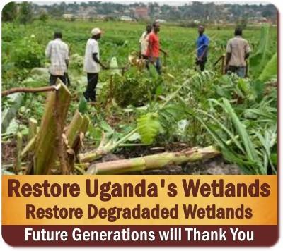 Nature is Restoring Uganda Wetlands by Force with Heavy Rains & Floods
