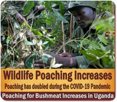 Tourism reduces Poaching