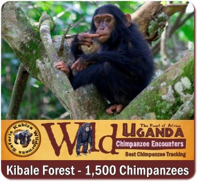 Why visit Uganda? 14-Reasons why you should Visit Uganda