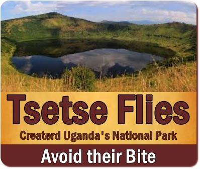 Tsetse Fly was the Creator of the Savannah Wildlife Parks