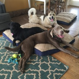 Practicing house manners in the Kabler living room during Taku, Cato, and Ollie's Residency.