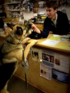 Shadow greeting the video store clerk for a reward on one of our outings.