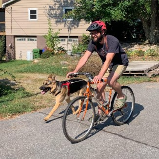 German Shepherds love to bike