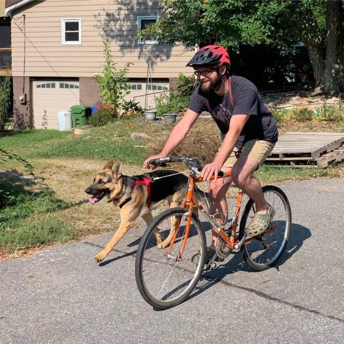 German Shepherds love to bike