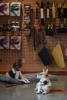 Tassie and Maya practicing their down stay in the Schools Pro Shop.