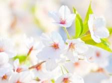 way-flower