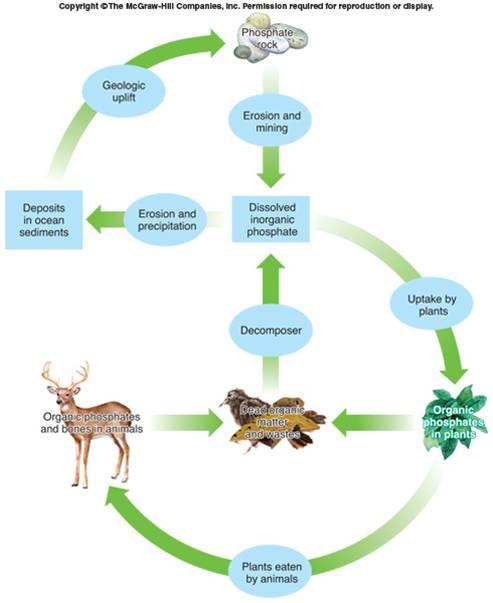 Contoh Kompetisi Dalam Ekosistem : contoh, kompetisi, dalam, ekosistem, Kompetisi, Kacamatajingga