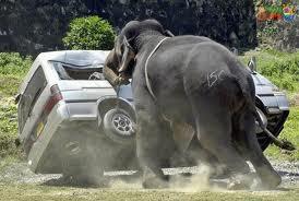 Buddha Shakyamuni said our mind is like a crazy elephant