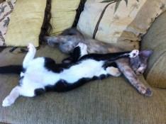 kittens in Buddhism