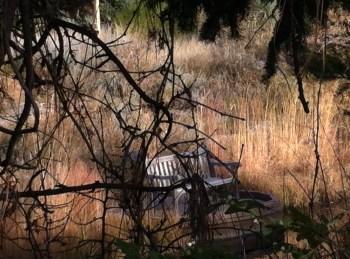 bench in botanical gardens