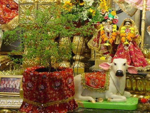 कार्तिक स्नान, आकाशदीपदान एवं तुलसीको विशेष पूजाराधना आजदेखि शुरु
