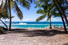 Life in Beach of Sea