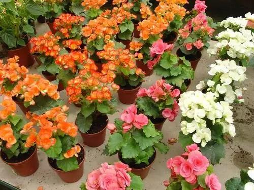 yaz çiçekleri 7