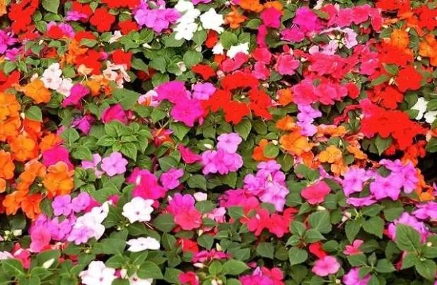 yaz çiçekleri 8