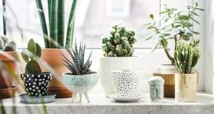 dekorasyonda bitki