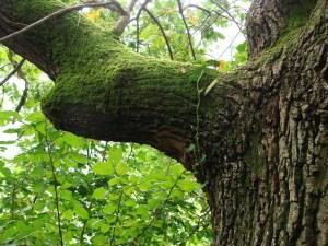 Rüyada Abanoz Ağacı Görmenin Anlamı