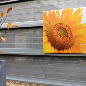 Tuinposter op 4cm frame 80x80 cm