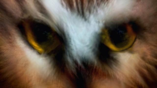 hoots watching you