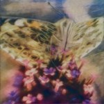 Floral_Butterfly image