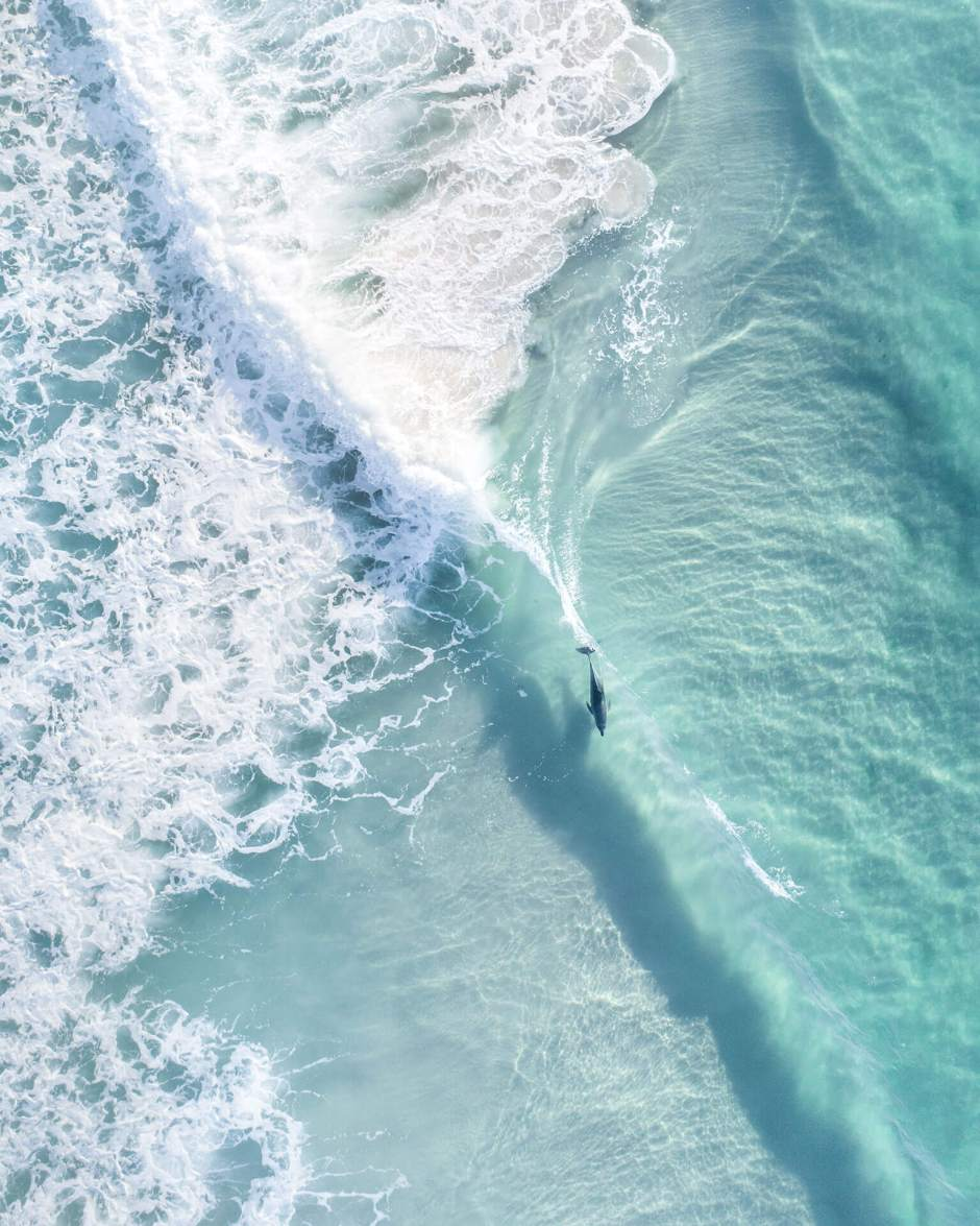 Aerial Of Dolphin