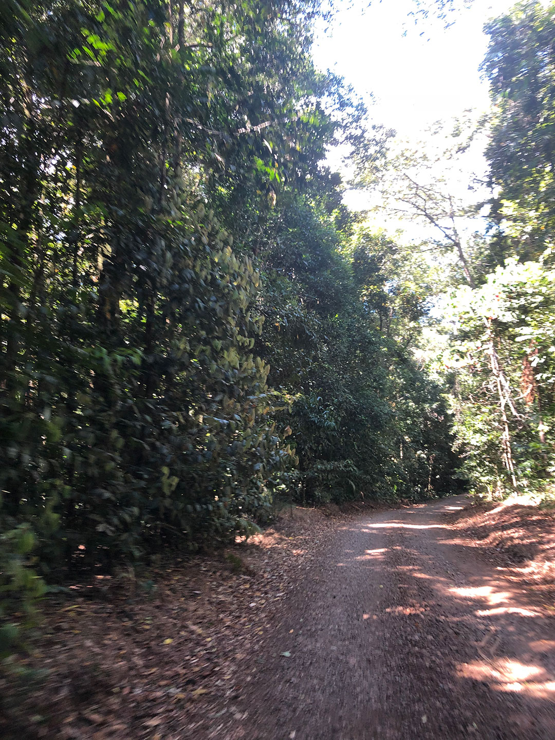 Old Cairns Track
