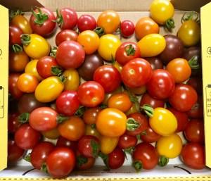 メルカリで家庭菜園の野菜(ミニトマト)を販売してみた話