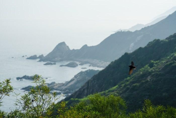山海之间,不羁的海鸥掠过它苍灵的身姿。